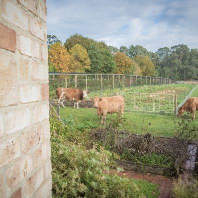 Farm Stay, Otway Ranges, Otways, Accommodation, Kawarren, getaway, cows